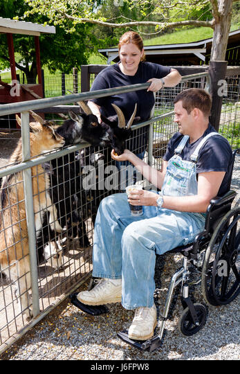 Tennessee Sevierville Smoky Mountain Deer Farm and Exotic Petting Zoo goat wheelchair man woman couple hand feed - Stock Image
