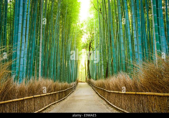 Kyoto, Japan bamboo forest. - Stock-Bilder