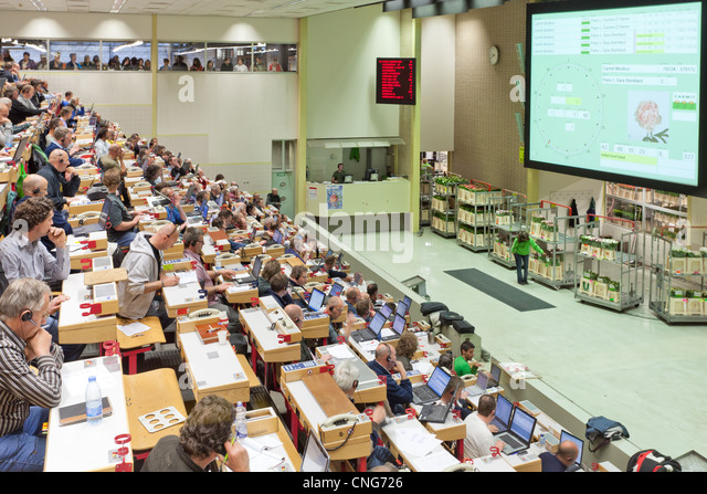 dutch flower auction Royal floraholland is known to be the largest flower auction in the world  with  a dutch clock auction system and uses an outstanding logistical network in the.