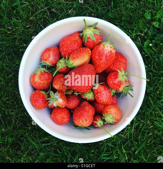 Homegrown strawberries - Stock-Bilder
