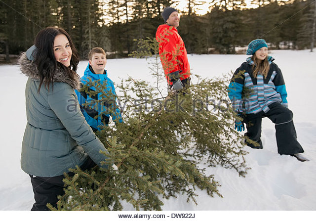 Family carrying cut down Christmas tree in snow - Stock-Bilder