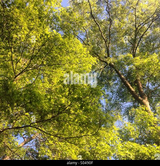 Inner city canopy - Stock Image
