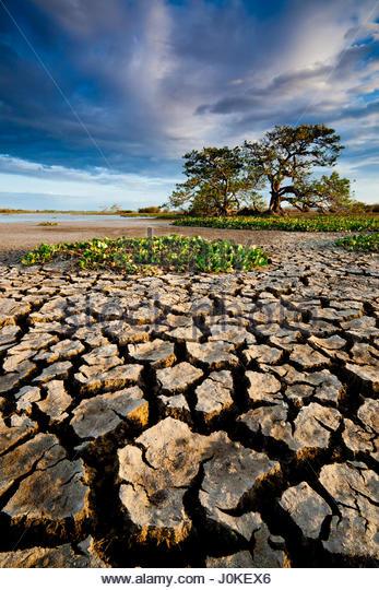 Cracked soil in the dry season in the wetlands of Cienaga de las Macanas, Herrera province, Republic of Panama - Stock-Bilder