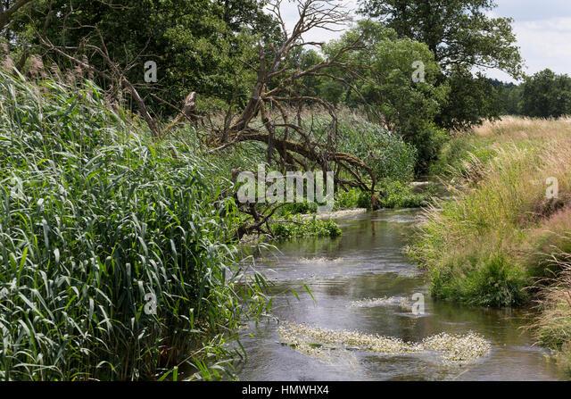 Bach, Bachlauf der Schaale, natürlicher Bachlauf, naturnaher Bach, Tieflandbach, Wiesenbach. rivulet, brook - Stock-Bilder