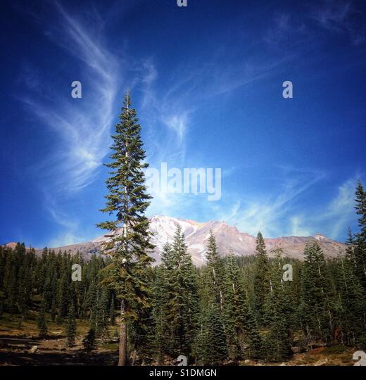 Cloud aura around a tall fir tree near Bunny Flats on Mount Shasta in California. - Stock Image