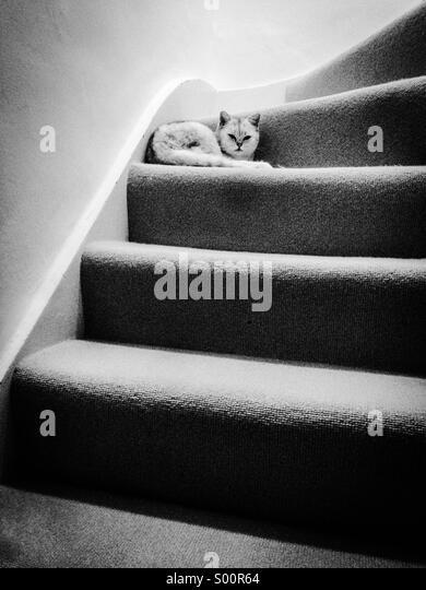 White cat resting on stairs - Stock-Bilder