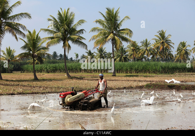 Farmer plowing field with machine, Bannur, Karnataka, South India, India, South Asia, Asia - Stock Image
