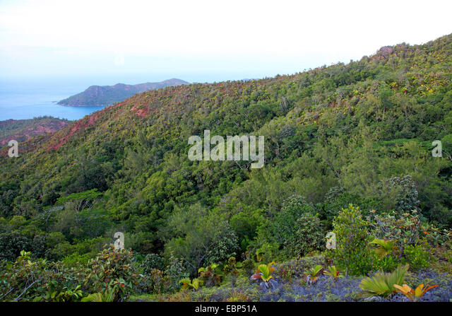 wooded jungle at Mount Zimbabwe, Seychelles, Praslin - Stock Image