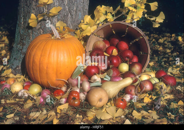 Autumn Still Life - Stock Image