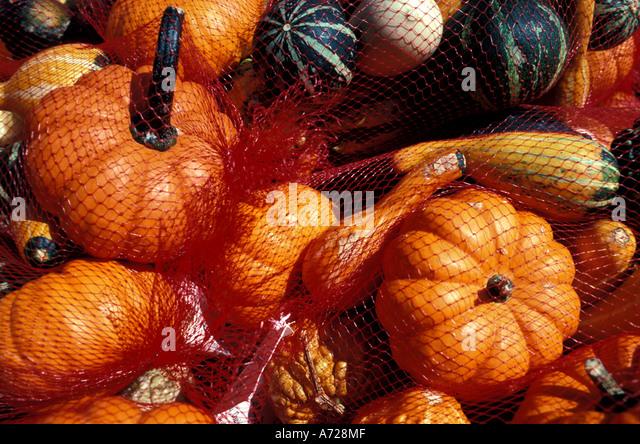 Fall colors autumn miniature pumpkins - Stock Image