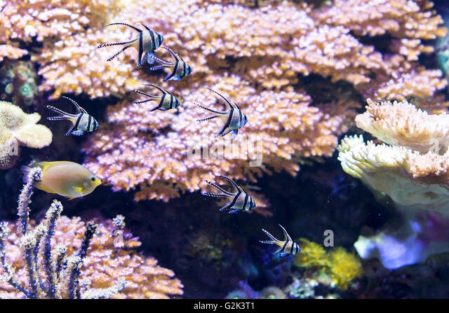 Various corals stock photos various corals stock images for Little fish swimming