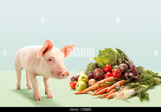 Piglet near fresh vegetables studio - Stock Image