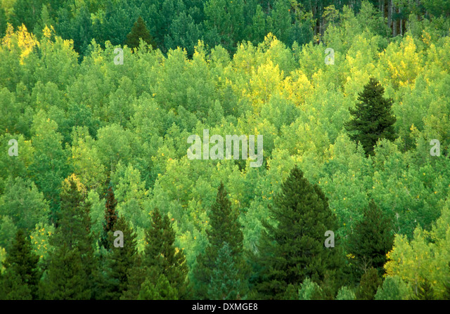 Early fall colors, Mount Zirkel Wilderness Area, Colorado USA - Stock Image