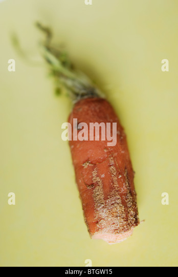 Half a carrot going moldy and starting to rot. Food waste in an affluent society. - Stock Image