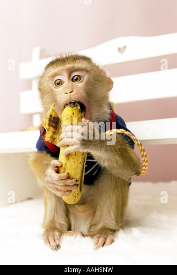 Monkey - Stock-Bilder