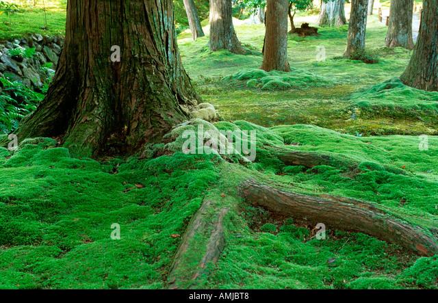 Saiho ji moss garden stock photos saiho ji moss garden - Moosgarten kyoto ...