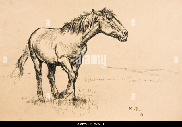 Horse portrait, charcoal on paper by Kurt Tessmann, 1936 - Stock Image