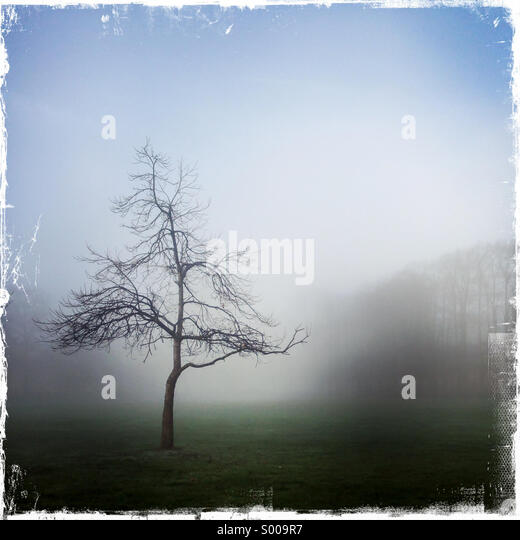Tree isolated in fog - Stock Image