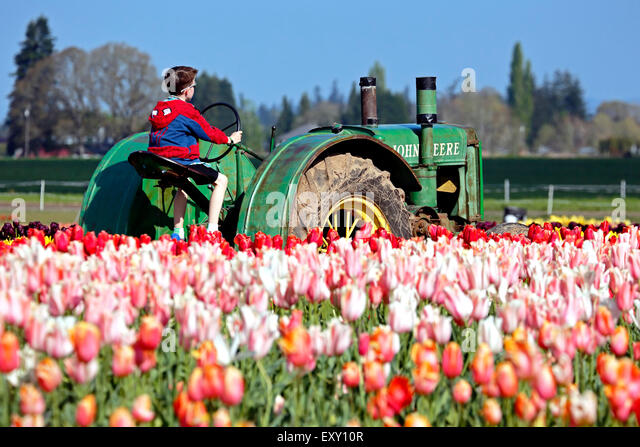 Colorful tulip field and boy sitting on tractor, Tulip Fest, Wooden Shoe Tulip Farm, Woodburn, near Portland, Oregon - Stock Image