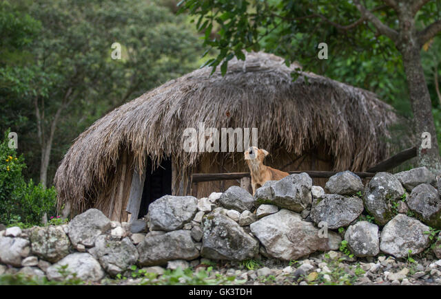 Dani tribe home in Baliem Valley, West Papua - Stock Image