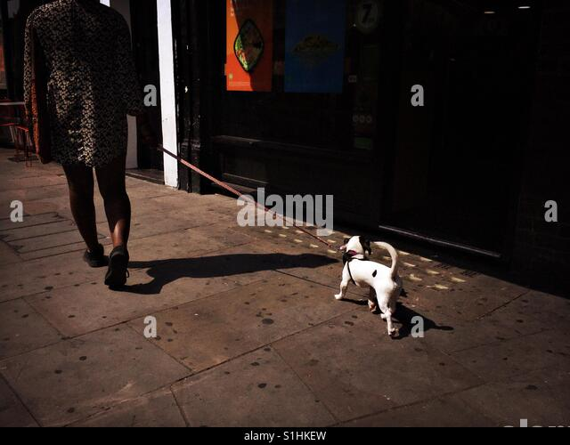 Puppy on a leash walked by it's owner - Stock Image