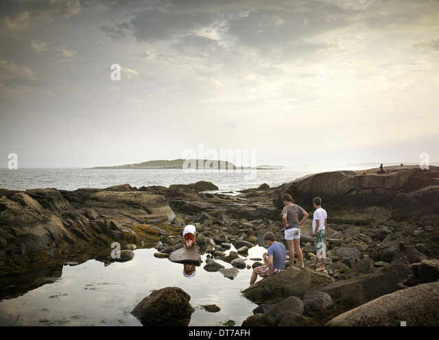 A group of people on the shore rock pooling and exploring the marine life View to an island offshore USA - Stock Image