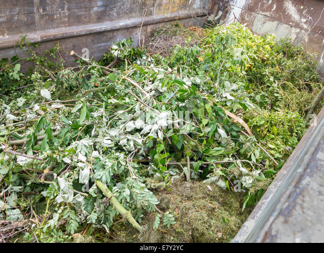 Local authority public recycling facility for green garden waste, UK - Stock Image