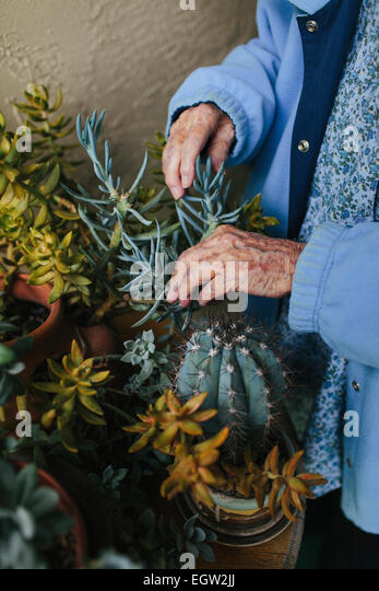 Senior woman tending to cactus. - Stock-Bilder