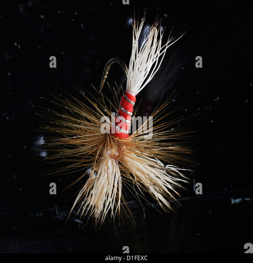 Wulff red artificial Fishing fly used in angling in extreme close shot in water - Stock Image