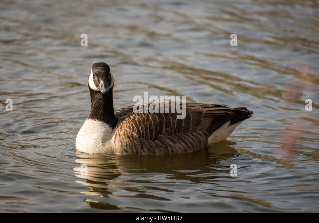 goose lake single men Your goose lake real estate search starts here view 9 active homes for sale in goose lake, ia and find your dream home, condo, townhome, or single family home with property listings on realtorcom.