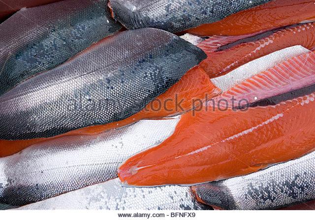 Silver Salmon caught in Glacier Bay, Gustavus, Alaska. - Stock Image
