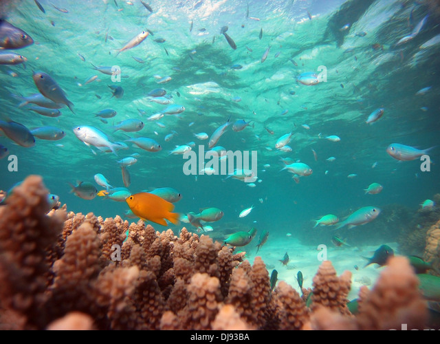 Great barrier reef fish stock photos great barrier reef for Great barrier reef fish