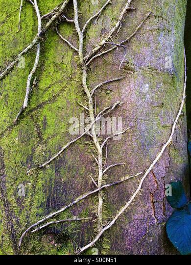 Detail of tree bark - Stock Image