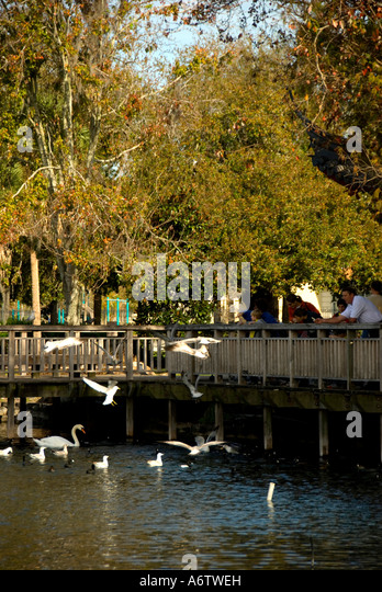 Orlando FloridaLake Eola Park feeding birds - Stock Image