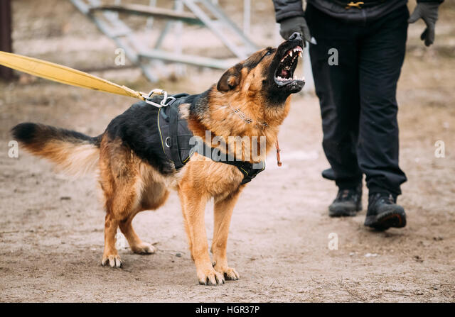 barking deutsch