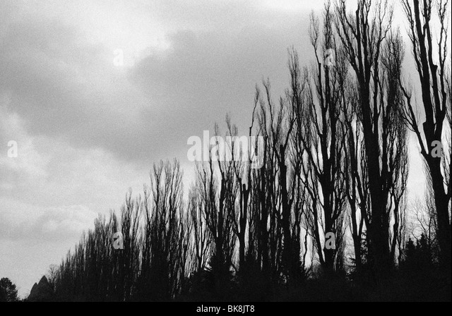 ROW OF TREES AND GRUNDTVIGSKIRKEN - Stock Image