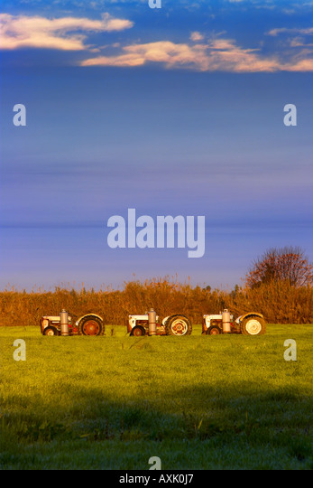 line of tractors cut crop grass ground farm land in nature in evening morning warm weather brown green plants blue - Stock Image