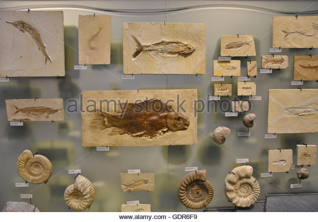 an introduction to the history of marine fossils Fossils are evidence of ancient life forms or ancient habitats which have been  preserved by natural processes  fossil brachiopods show that wales' highest  peak was once under a warm, semi-tropical sea  introduction  at this time,  people started to calculate the age of the earth and get to grips with the fact that  the.