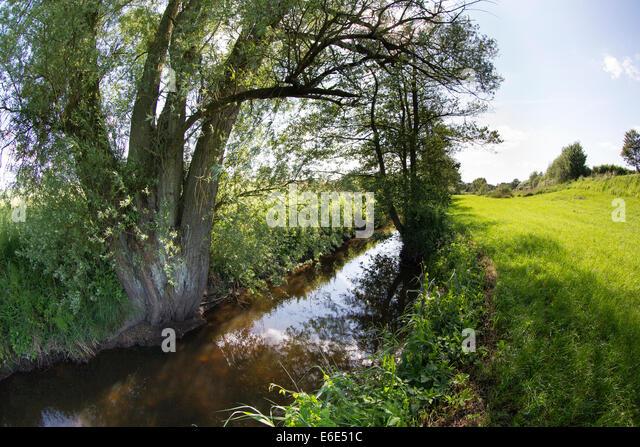 rivulet, brook, willow, Bach, Bachlauf, Bille, Schleswig-Holstein, Deutschland, Weide, Baum, Salix, Ufer - Stock-Bilder