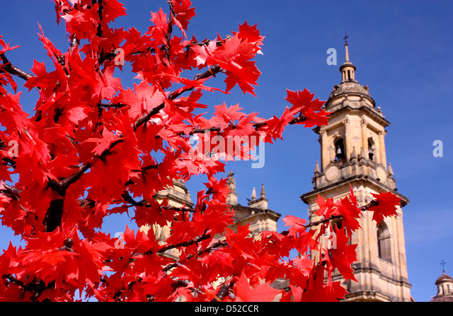 Cathedral of Bogota. La Candelaria district, Bogota, Colombia. - Stock Image