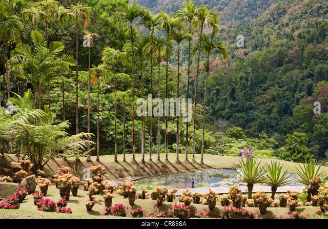 Balata tree stock photos balata tree stock images alamy for Jardin west palm