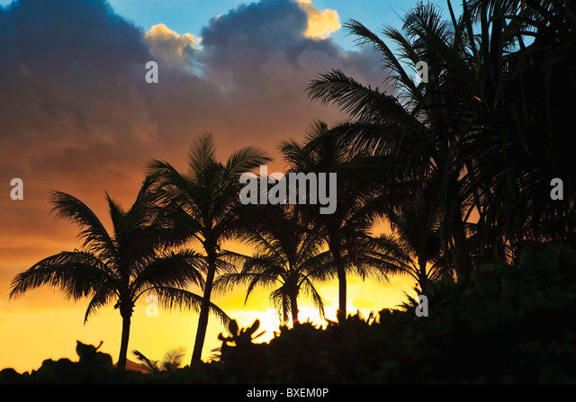 pacific sunrise behind the coconut palms in hawaii - Stock Image