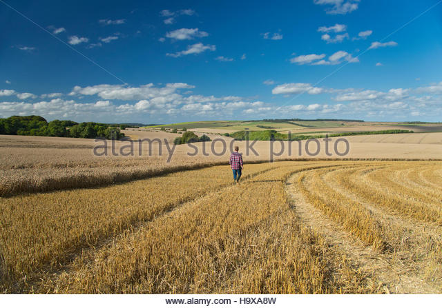 Rear View Of Farmer Walking Through Harvested Field - Stock Image