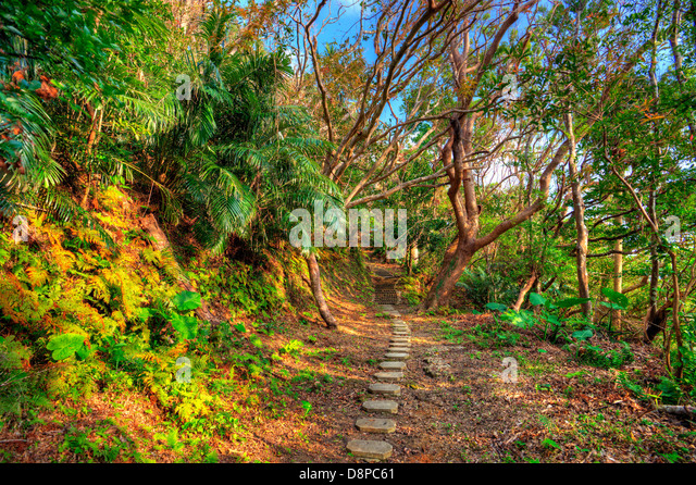 Hiking trail the jungle of Okinawa, Japan. - Stock-Bilder