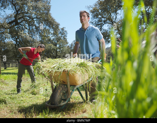 Man pushing wheelbarrow full of ha - Stock Image