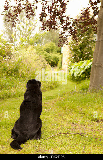 Black dog waiting on garden path - Stock Image