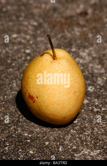 the pomaceous fruit of the apple Did you know an apple is the pomaceous fruit of the apple tree, malus domestica of the rose family (rosaceae) apples grow on deciduous trees which are large if grown from seed, but small if grafted onto roots (rootstock.