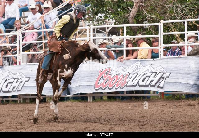 Junior bull riding, Strathmore Heritage Days, Rodeo, Strathmore, Alberta, Canada - Stock Image