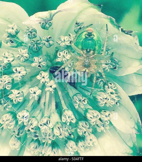 Tiny spider on flower head - Stock-Bilder