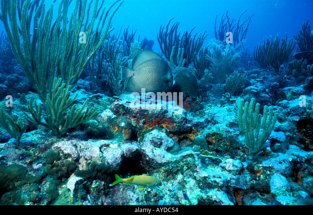 Puerto Rico coral reef - Stock Image